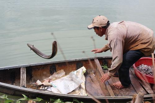 Bình Định: Đổi đời nhờ nuôi cá chình