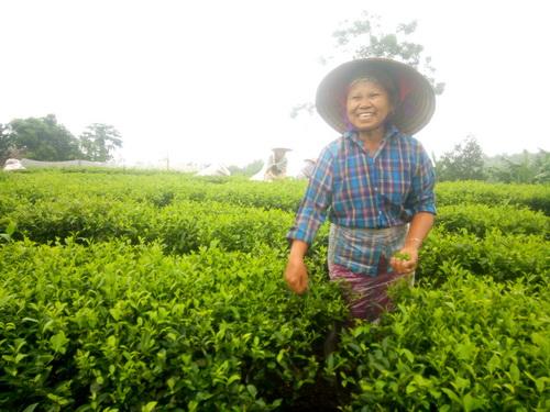 Huyện Phú Bình (Thái Nguyên): Sức sống mới ở các làng nghề chè