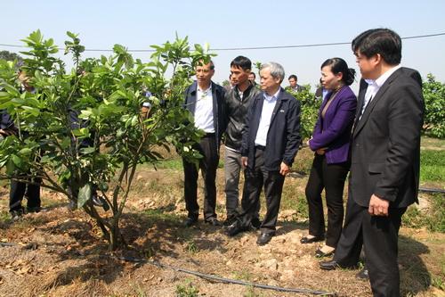 Kinh tế trang trại- Mô hình phát triển bền vững trong sản xuất nông nghiệp