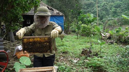 Yên Bái: Lợi nhuận cao từ mô hình nuôi ong lấy mật
