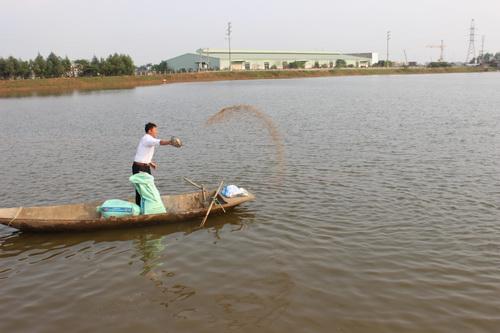 Mô hình nuôi cá của ông Chiến nhiều năm đạt hiệu quả kinh tế cao