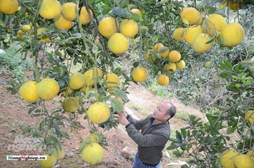 Tuyên Quang: Chú trọng làm nông sản có truy xuất nguồn gốc