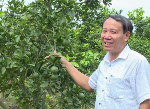 Thu tiền tỷ từ trồng cây ăn quả