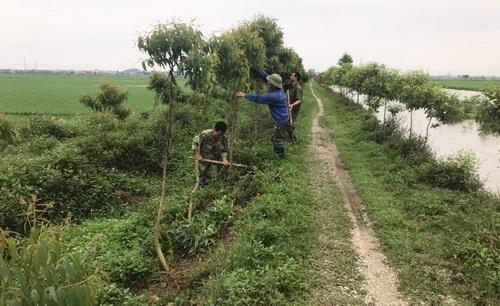 Hội ND Nghệ An hưởng ứng Tết trồng cây Xuân Tân Sửu năm 2021