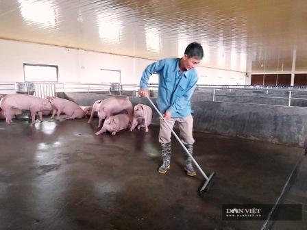 Image - 324 xã đang có dịch tả lợn châu Phi, Bộ NNPTNT yêu cầu tập trung chống