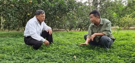 Long An: Ông trồng rau diếp cá, bà trồng rau xà lách xoong, cả 2 đều là tỷ phú nông dân, ở cùng 1 xã