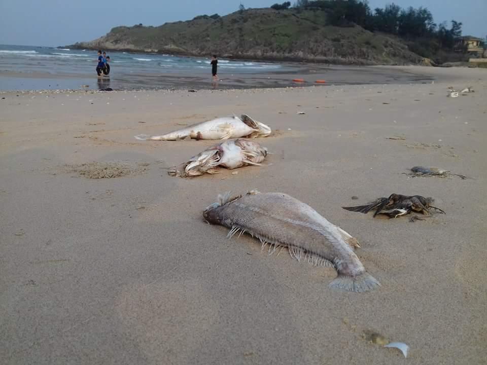 Vụ cá chết: Điều tra, xử lý nghiêm các hành vi vi phạm