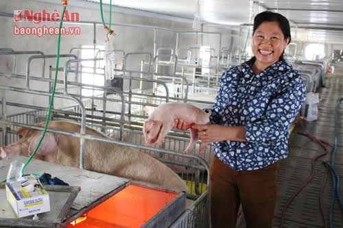 Thu tiền tỷ từ nuôi lợn nái ngoại