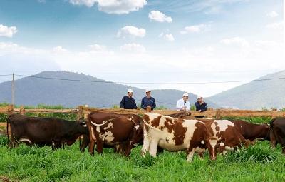 Vinamilk xây Trang trại bò sữa Organic đầu tiên tại Việt Nam