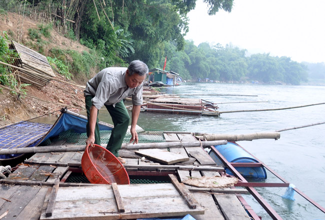 Yên Nguyên phát triển nghề nuôi cá lồng đặc sản
