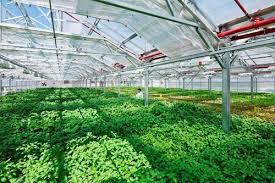 Tạo điều kiện phát triển nông nghiệp ứng dụng công nghệ cao