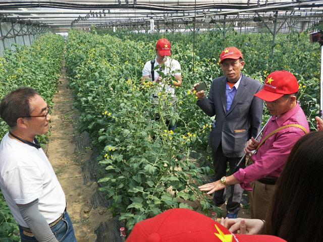 """Theo chân nông dân Việt sang """"du học"""" ở xứ sở nhân sâm"""