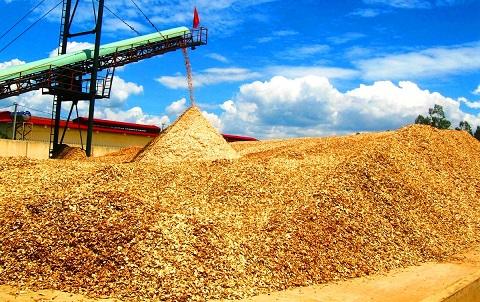 Trung Quốc lại giở trò ngừng thu mua dăm gỗ để ép giá?