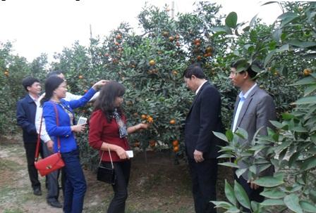 Hội Nông dân huyện Thanh Oai(Hà Nội): Đa dạng các hình thức giúp hội viên, nông dân thoát nghèo
