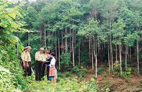 Hỗ trợ trồng rừng tới 10 triệu đồng/ha