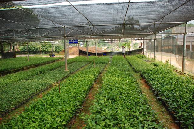 Địa phương chịu trách nhiệm về sản xuất, hạn chế dư thừa nông sản