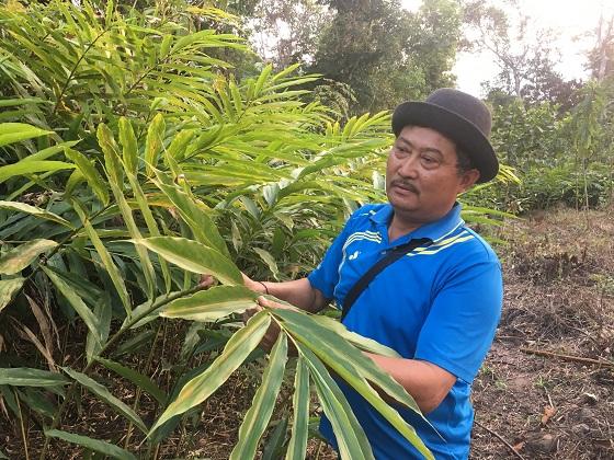 Nơi biên giới, trồng cây thuốc quý, ra quả dưới gốc, đút túi 180 triệu/năm