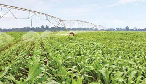 Vốn rót cho nông nghiệp công nghệ cao: Nhiều nhưng vẫn thiếu
