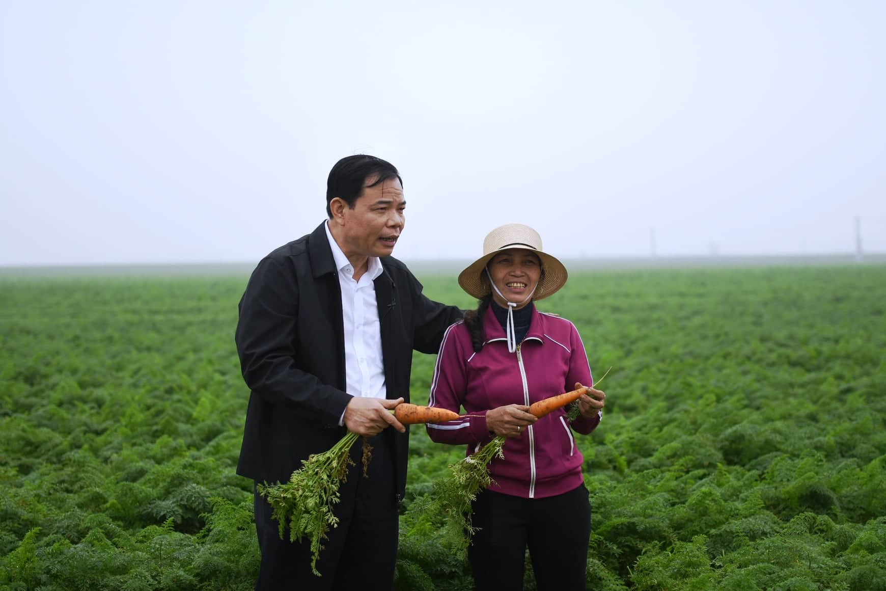 Trăn trở của vị Bộ trưởng giữa cánh đồng cà rốt lớn nhất miền Bắc