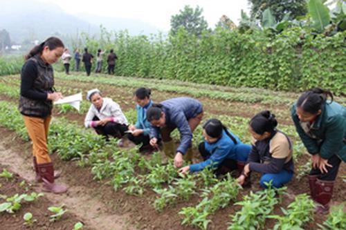 Vĩnh Phúc: Đẩy mạnh hoạt động hỗ trợ nông dân