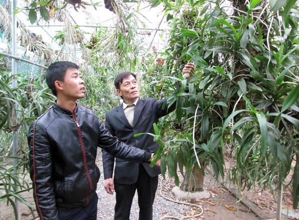 Ông Dương Kim Thành (phải) – Chủ tịch Hội ND xã Đông La thăm vườn lan của gia đình anh Tạ Công Soái.