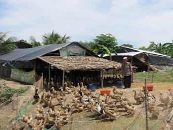 Chi Hội phó nông dân thu nhập 400 triệu đồng/năm