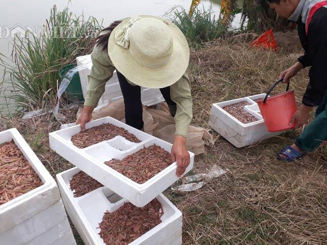 Làm giàu ở nông thôn: Vớt rồng đất nổi lúc nhúc mà có tiền tỷ