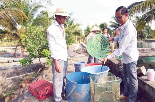 Chuyện làm giàu: Ngôi vua cá chình phải đánh đổi bằng 50 cây vàng