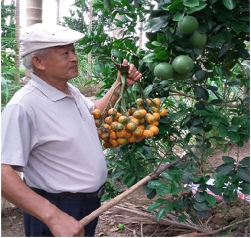 U70 trồng vườn cau 1.100 gốc, mỗi năm đút túi hơn 300 triệu đồng