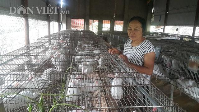 Làm giàu ở nông thôn: Nuôi 600 con thỏ, U70 bỏ túi đều 10 triệu đồng/tháng