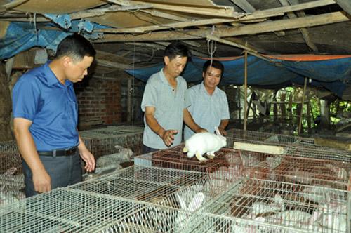 Ở nơi này, dân trồng cam đặc sản, nuôi thỏ ngoại mà khấm khá