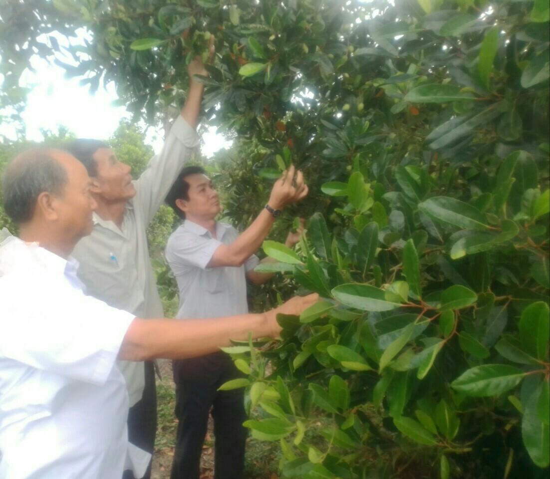 Đồng Tháp: Nông dân Long Thắng ra mắt Tổ hợp tác trồng cà na