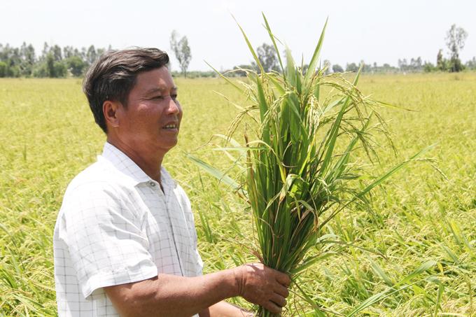 Kiên Giang: Biến cả chục ha đất cằn thành ruộng lúa nếp thơm lừng