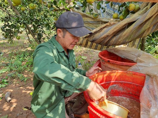 Nghệ An: Cho cam ăn cá, 10 cây trĩu quả cả 10, đã thế ăn lại ngọt