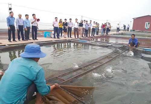 Đánh thức tiềm năng nuôi cá nước ngọt ở miền Bắc