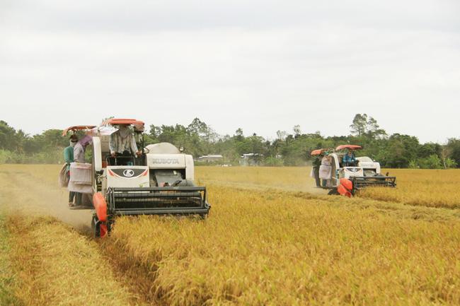 Hạt gạo Việt - từ bát cơm cứu đói đến thu tỷ đô 1