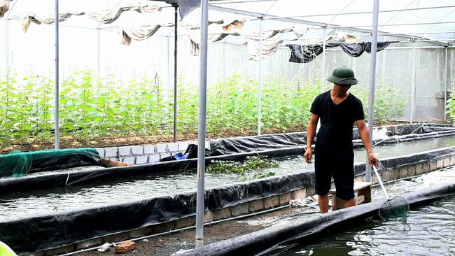 Hải Phòng: Nông dân trẻ biến đất trũng thành đất vàng