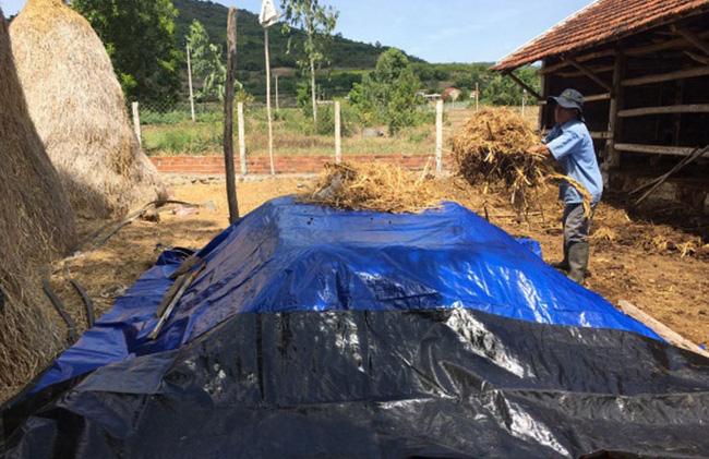 Phú Yên: Đi nhặt thứ vứt đi ủ thành loại phân bón cho cây nào cây ấy khỏe như vâm