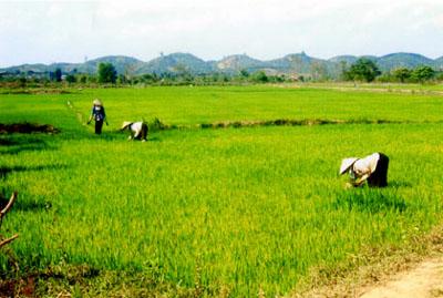 Miễn thuế đất nông nghiệp góp phần khuyến khích đầu tư vào nông nghiệp