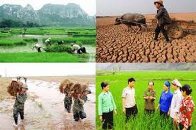 Đề xuất chính sách hỗ trợ bảo hiểm nông nghiệp