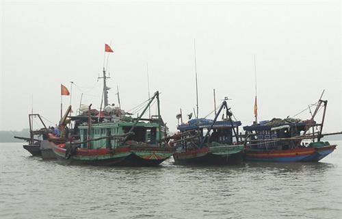 Cuộc chiến với khai thác thủy sản theo kiểu tận diệt ở Thanh Hóa vẫn gian nan