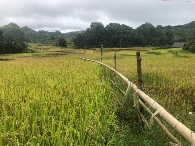 Lào Cai chú trọng nông, lâm nghiệp và xây dựng nông thôn mới