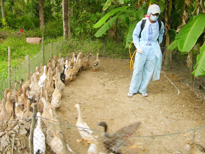 Đặc biệt lưu ý phòng chống dịch bệnh động vật sau mưa lũ
