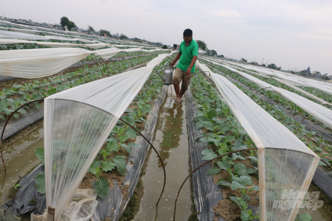 Thái Bình: Mở rộng diện tích sản xuất rau VietGAP