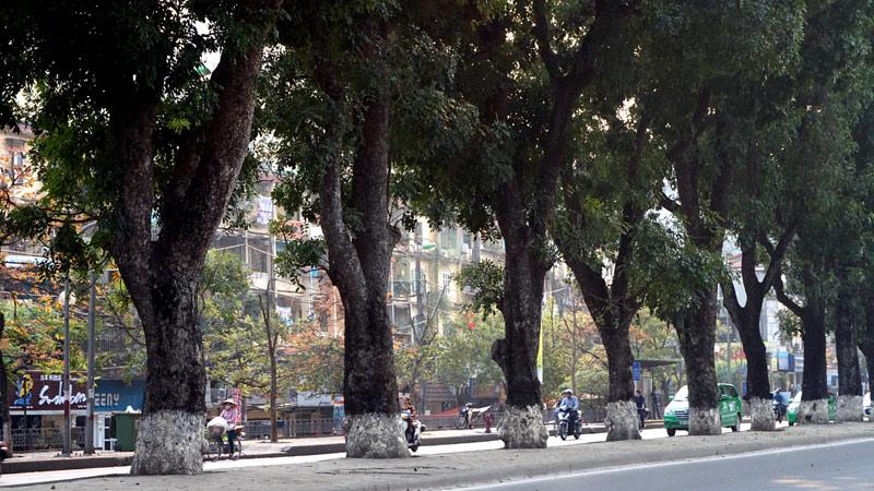 Hình ảnh phố Hà Nội tuyệt đẹp nhờ những hàng cây