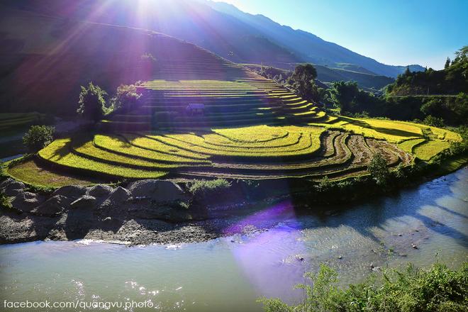 Mù Cang Chải rực vàng giữa mùa thu